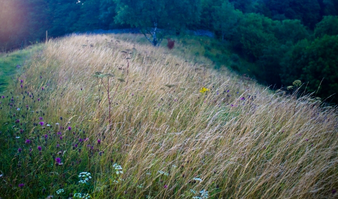 grasses-and-flowers